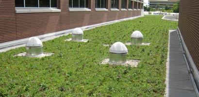 Green roofing services